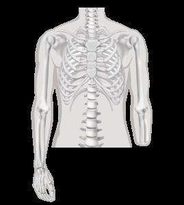 Onderarm-amputatie - Amputatieniveau armamputatie